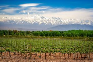 Best Hostels for Solo Travellers, Couples, & Groups in Mendoza, Argentina
