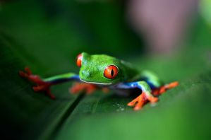 Cheap Tours and Activities in Guanacaste, Costa Rica