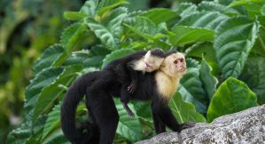 The Best Hostels in Manuel Antonio and Quepos for Backpackers