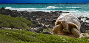 Affordable Tours to the Galapagos Islands, Ecuador