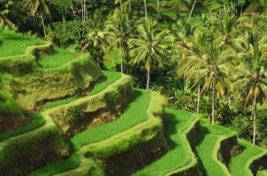Best Hostels, Guesthouses, and Homestays in Ubud, Bali