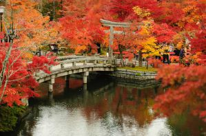 Cheap Tours and Activities in Kyoto