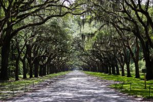 Savannah, Georgia: Cheap Activities and Tours on a Budget