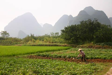 Farms near Yangshuo, China