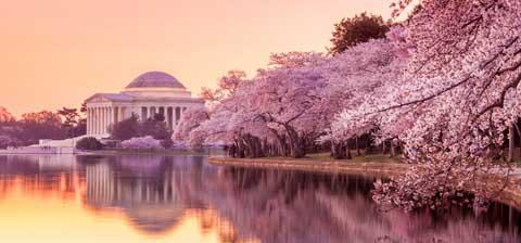 The Lincoln Memorial during the Cherry Blossom Festival - Washington, D.C.