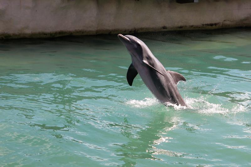 Dolphin at Costa Maya Cruise Port