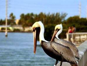 The Best Dive Resorts in the Florida Keys