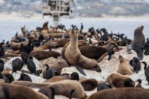 Best Airbnb & VRBO Vacation Rentals in Monterey & Pacific Grove