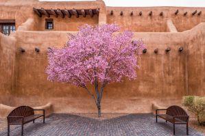 Best Airbnb & VRBO Vacation Rentals in Santa Fe, NM