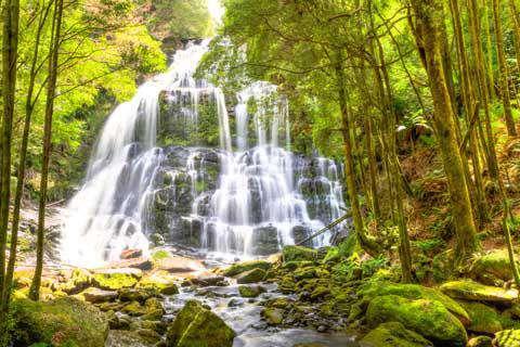 Nelson Falls, Franklin-Gordon Wild Rivers National Park, Tasmania, Australia