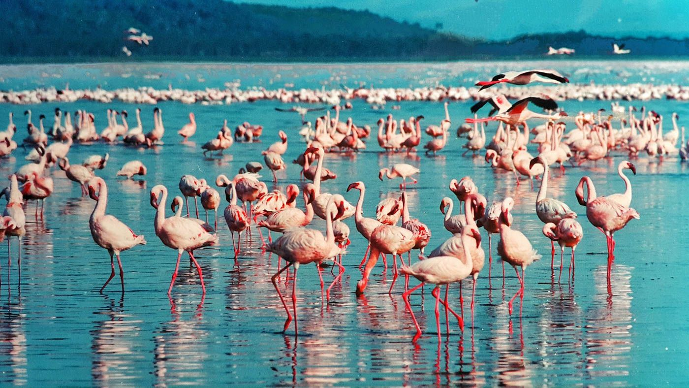 Kenya Travel Costs & Prices - Wildlife Safaris, Masai Mara & Maasai