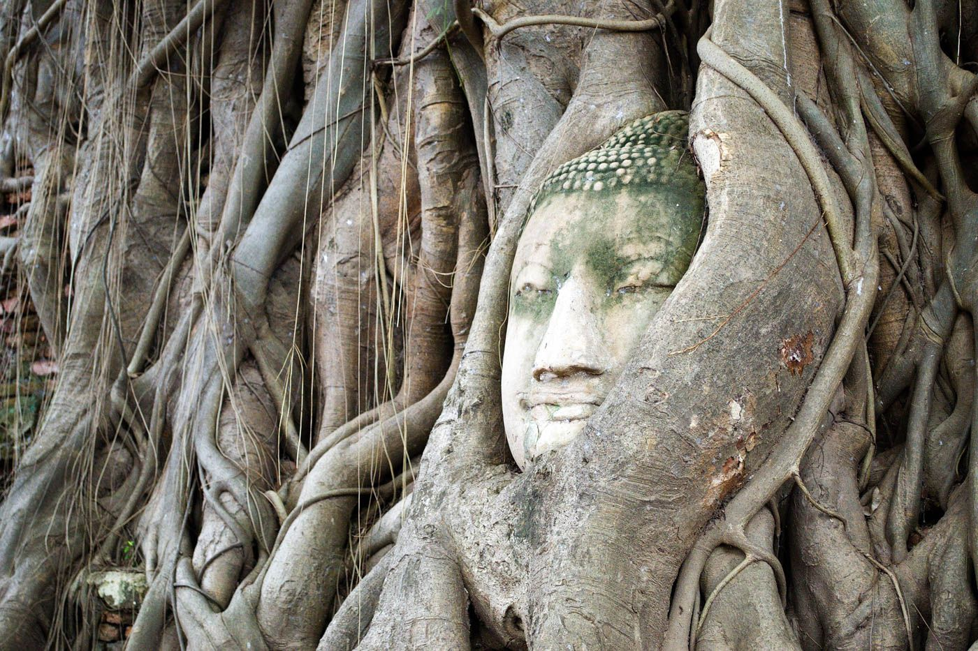 Ayutthaya Travel Costs & Prices - Temples and Ruins