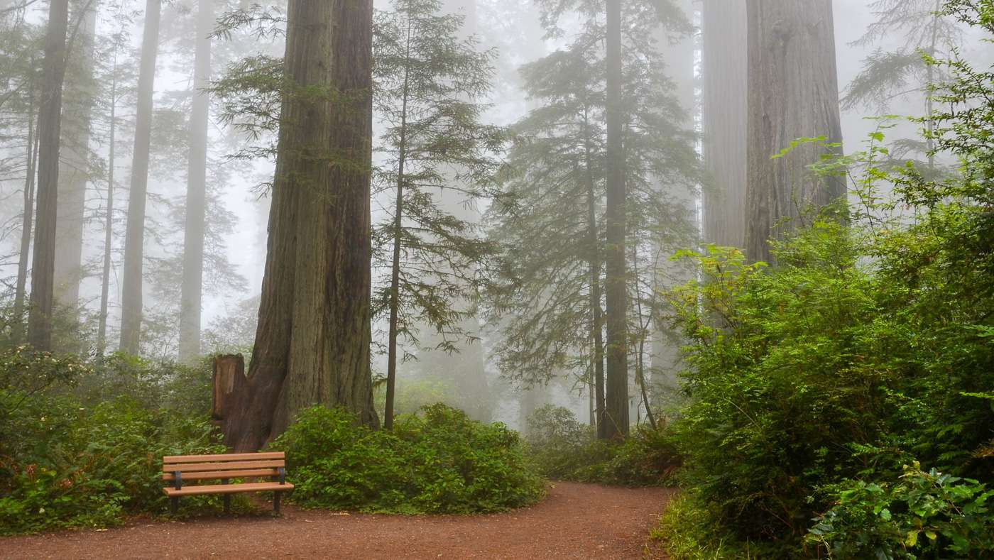 Redwood National Park Travel Cost - Average Price of a ...